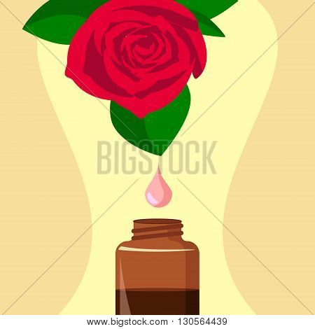 vector illustration of essential oil of rose / extraction of essential oil