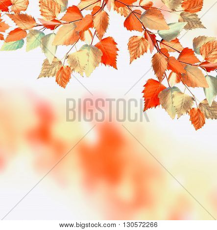 Autumn foliage. Golden Autumn. Photo. colorful foliage