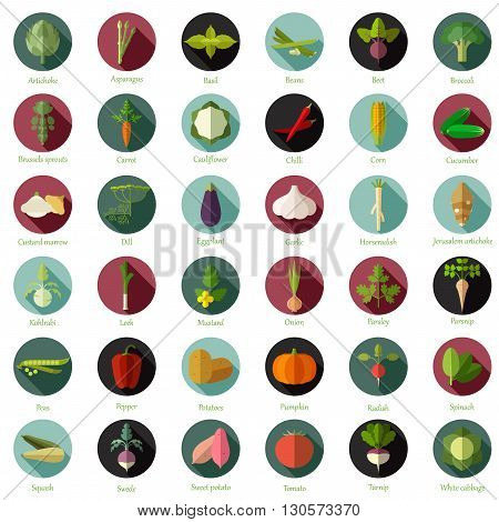 Vector image of the Set of flat round vegetable icons