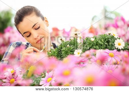 springtime woman touches the petal of daisy in garden of daisies flowers