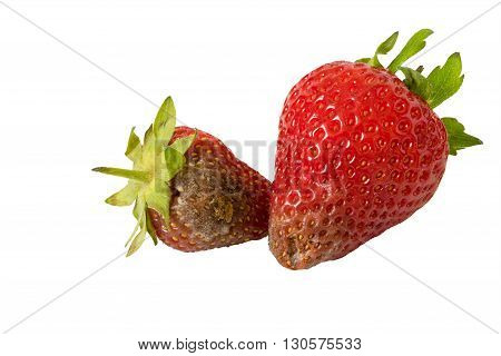 Rotten strawberries isolated on white background closeup.