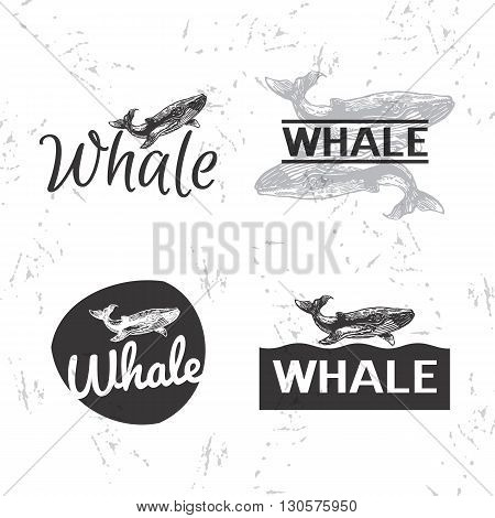 Vector black and white set with whale. The whale as main element of logotypes
