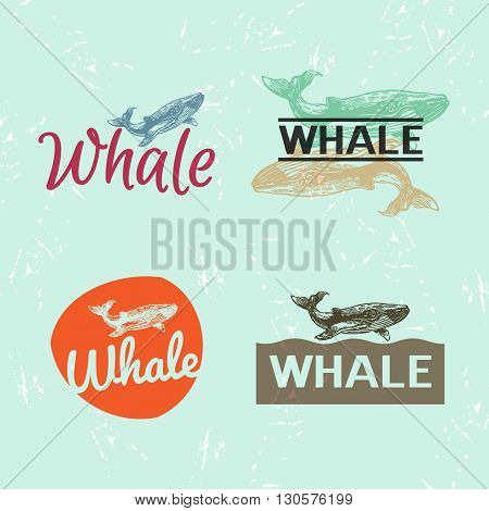 Vector colourful set with whale. The whale as main element of logotypes on blue background