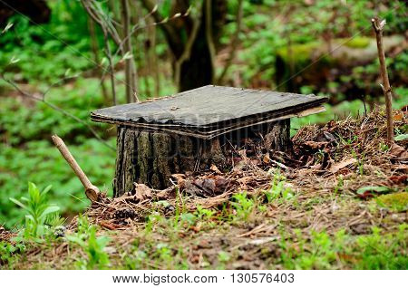 interesting small self-made bench from a forest stub