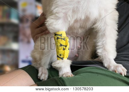 Checking dog leg sore with a yellow bandage.