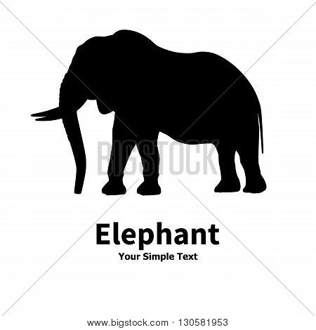 Vector illustration of an elephant silhouette isolated on white background. Large animal elephant with tusks.