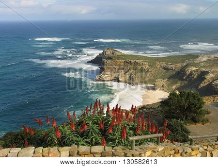 View Of Cape Point With Aloes In Fore Ground, Cape Town South Africa