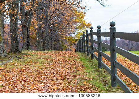 fence with tree in falls and leaves on the ground