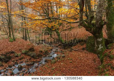 Autumn forest, green, yellow and red colours