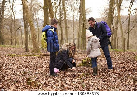 Family exploring nature together in a wood