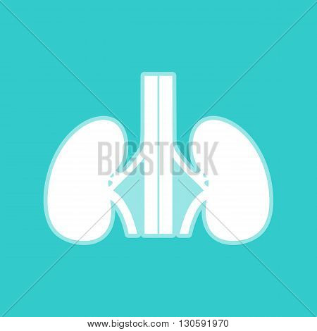 Human kidneys sign. White icon with whitish background on torquoise flat color.
