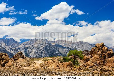 Rock Formation With A Tree, Alabama Hills, Sierra Nevada