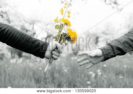 boy gives a girl a bouquet of wild flowers in the apple orchard black and white