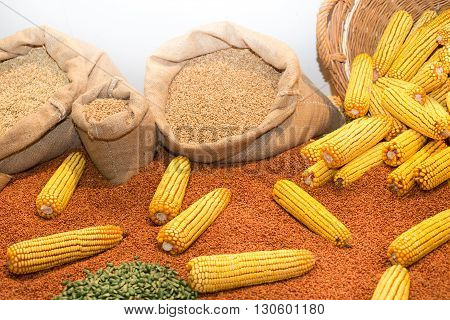 Agricultural Product Assortment