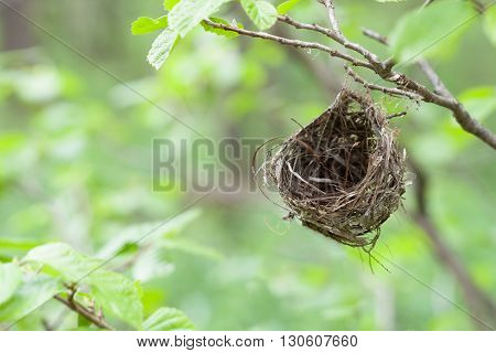 A small empty nest hanging in the woods from a small branch.
