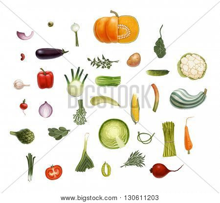 Hand-drawn vector vegetables, isolated on transparent background: tomato, spinach, vegetable marrow, corn, rosemary, green peas, beet, olive, eggplant, salad,  onion, leek, potato, carrot, and so on