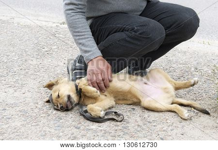 Man's hand touching a sick dog lying on the pavement
