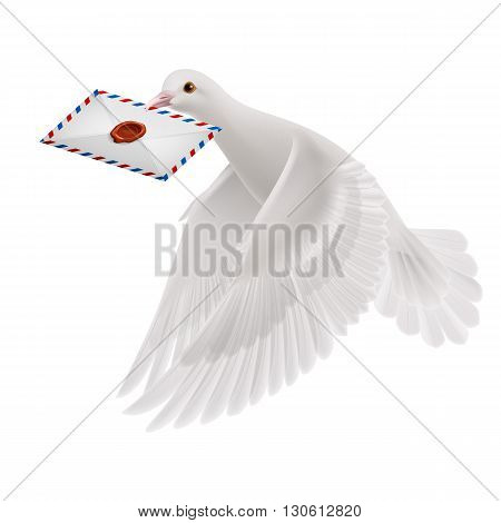 Pigeon fly with letter in beak on white background