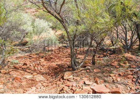 Natural sandstone rock and flora in Kalbarri National Park in Western Australia.
