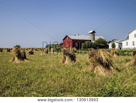 Amish Farm with Harvested Wheat Stacks and Red Barn