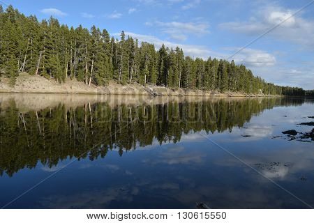 The trees along the yellowstone river reflect into the river