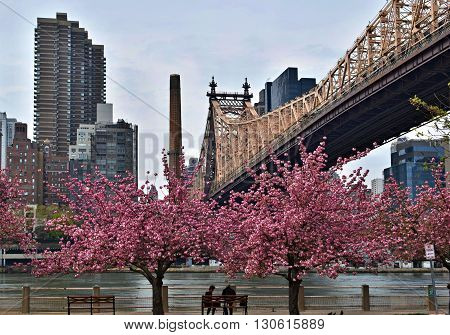 NEW YORK CITY - APRIL 22, 2016: Queensboro Bridge and New York Skyline from Roosevelt Island with 2 unrecognizable tourists