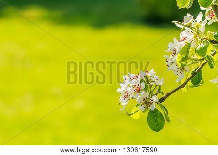 Branch With Blooming Flowers