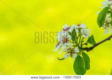 Branch With Blooming