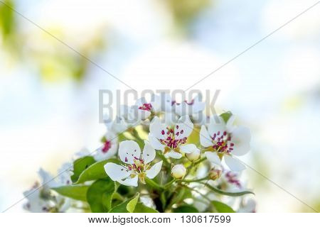 Tree Blooms In White