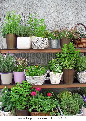 variety of flower pots on a shelf