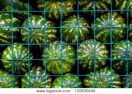 Background of big sweet green watermelons in cage