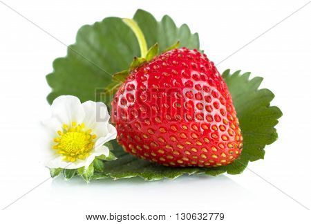 Macro Whole Strawberry With Leaf And Flower Isolated On White
