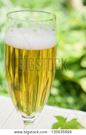 glass of lager beer in summer garden