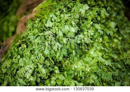 Selection of fresh green cilantro. Traditional thai market.