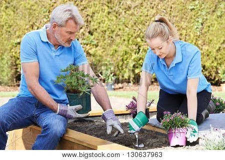 Two Landscape Gardeners Planting In Flower Bed