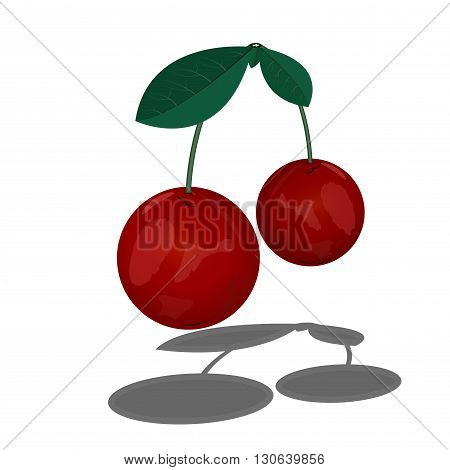 Two cherries on a stalk. Branch with cherry leaves. Ripe cherry.