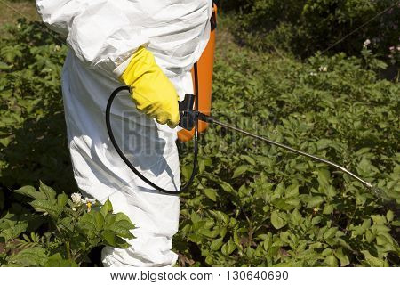 Pesticide spraying. Vegetables spraying with pesticides in the garden