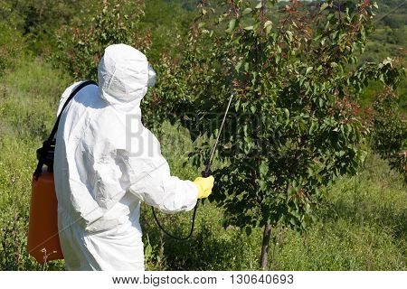 Pesticide spraying. Fruit tree spraying with pesticides in the orchard