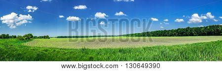Nice and wonderful view sown field. Good picture.