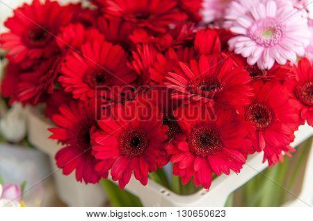 Red Gerbera flowers at Amsterdam flower market.