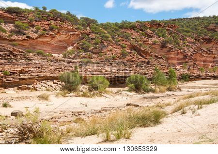 Valley with red and white banded tumblagooda sandstone cliffs in the Murchison River gorge in Kalbarri National Park with green flora under a blue sky with clouds in Western Australia.