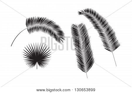 Set of palm tree leaves silhouettes isolated on white background. Vector illustration