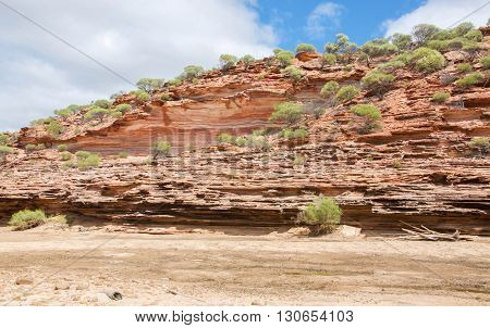 Details of the red and white banded tumblagooda sandstone cliffs in the valley of the Murchison River gorge in Kalbarri National Park with native plants under a blue sky with clouds in Western Australia.