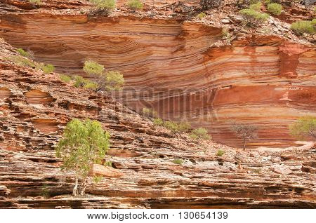 Red and white banded tumblagooda sandstone cliffs dotted with plants along the Murchison River gorge in Kalbarri National Park in Western Australia.