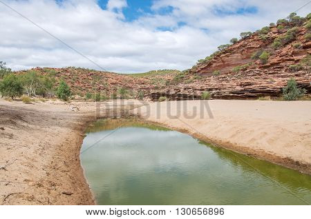 Red and white banded tumblagooda sandstone cliffs in the valley of the Murchison River gorge with minimal water in Kalbarri National Park with native plants under a blue sky with clouds in Western Australia.