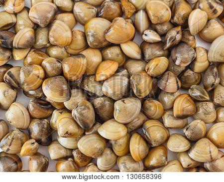 Top view of seafood - clams - shellfish