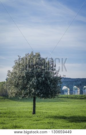 Italy, Rome, Acquedotto Claudio - Tree and Roman ruins of the aqueduct in the background