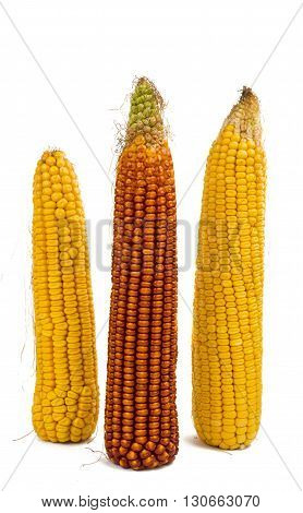 farming, food, corn isolated on white background