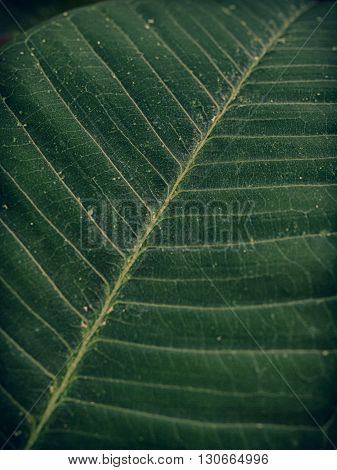 leaf surface texture background  or backdrop. (Vintage Style)