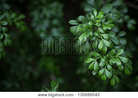 Low key green plants, leaves for background,textured from outdoor park, garden of rain forest country, good nature the symbolic of healthy plentiful environment and life circle of the earth,  the photo came with toned natural colour and selective focus